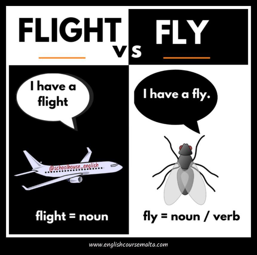 difference between fly and flight, infographic, fly is an insect, flight is the noun like fly in an airplane