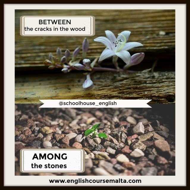 infographic plant between 2 pieces of wood and 2nd picture of plant among stones